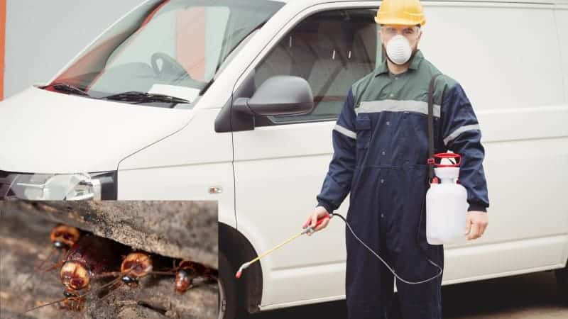 How to Get Rid Of Cockroaches In Car Naturally – Rx Mechanic